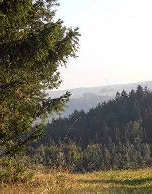 Bio Wald und Wiese in Hochwolkersdorf