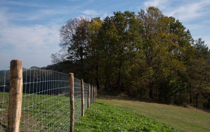 Bio-Weide mit schützendem Zaun und schattigem Wald